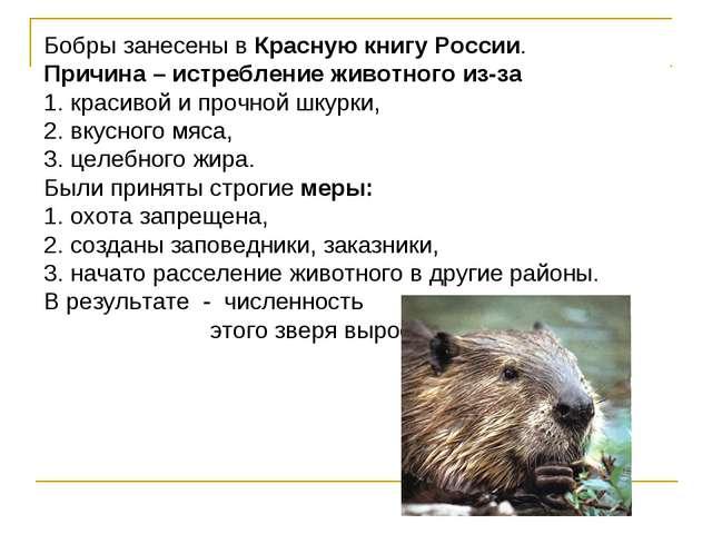 Бобры занесены в Красную книгу России. Причина – истребление животного из-за...