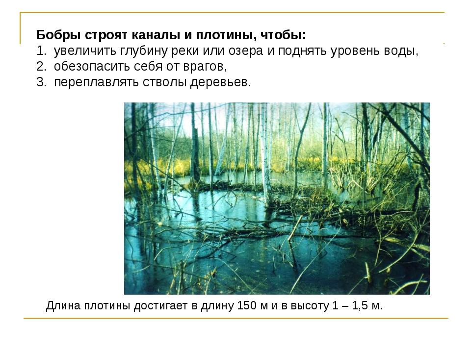 Бобры строят каналы и плотины, чтобы: увеличить глубину реки или озера и под...