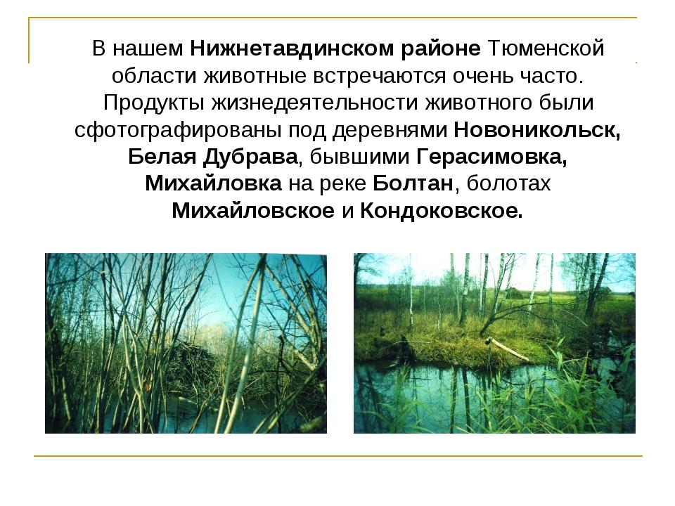 В нашем Нижнетавдинском районе Тюменской области животные встречаются очень ч...