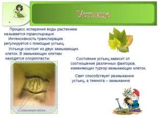 Процесс испарения воды растением называется транспирация. Интенсивность тран