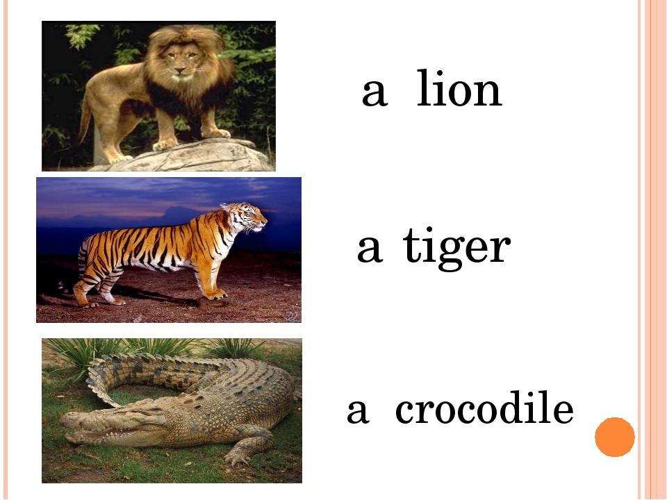 a lion a tiger a crocodile