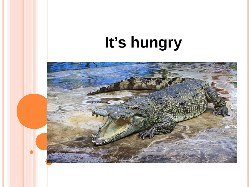 It's hungry