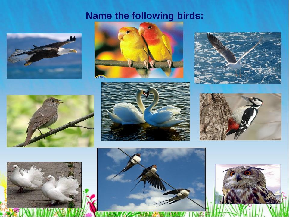* Name the following birds: Лето
