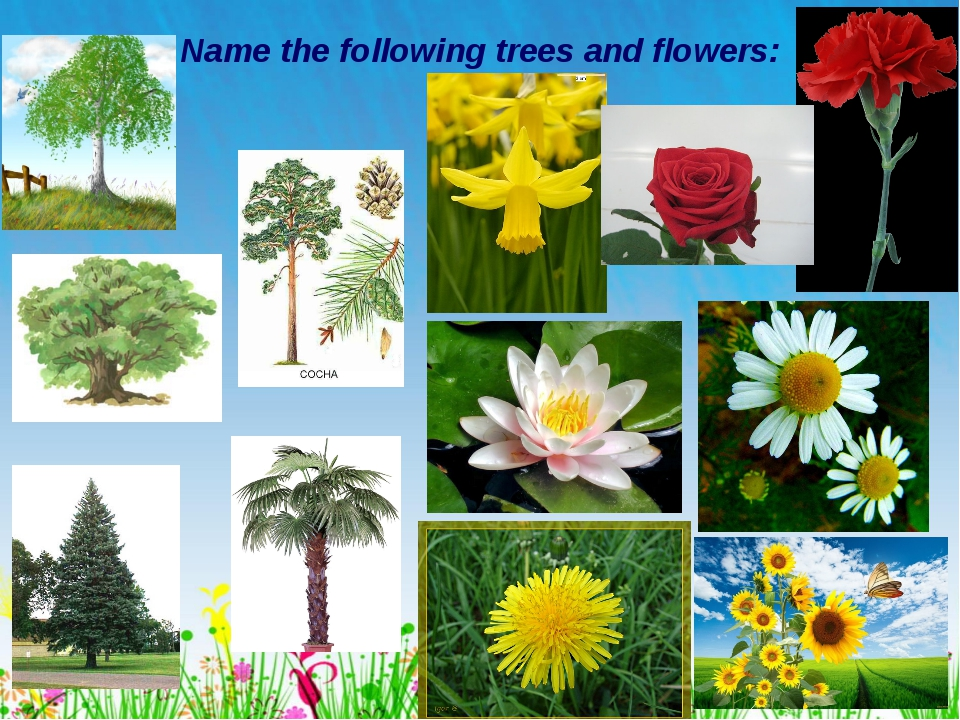 * Name the following trees and flowers: Лето
