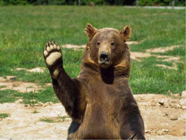 Великан в лесу живет, Он - сладкоежка, любит мед. Когда испортится погода, Он...