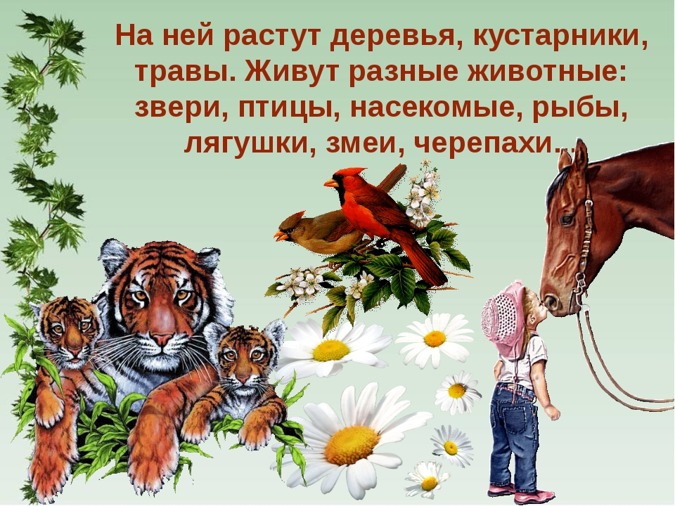 На ней растут деревья, кустарники, травы. Живут разные животные: звери, птицы...