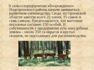 В сельхозпредприятии «Возрождение» Подгоренского района начали заниматься ра