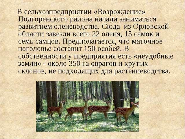 В сельхозпредприятии «Возрождение» Подгоренского района начали заниматься ра...
