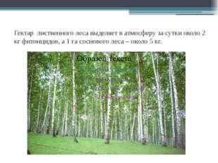 Гектар лиственного леса выделяет в атмосферу за сутки около 2 кг фитонцидов,