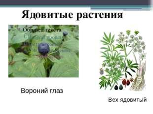 Вороний глаз Вех ядовитый Ядовитые растения