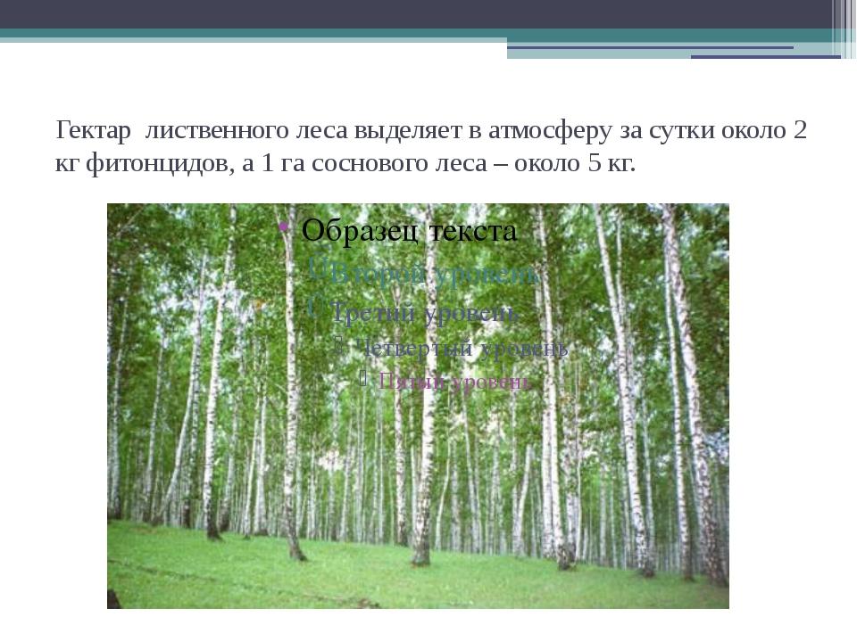 Гектар лиственного леса выделяет в атмосферу за сутки около 2 кг фитонцидов,...