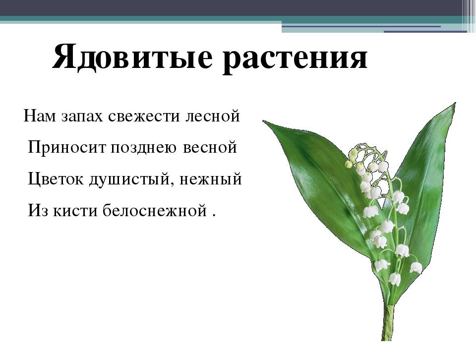 Нам запах свежести лесной Приносит позднею весной Цветок душистый, нежный Из...