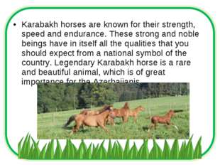 Karabakh horses are known for their strength, speed and endurance. These stro