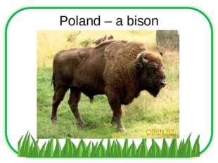 Poland – a bison