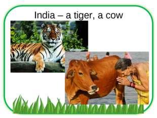 India – a tiger, a cow
