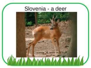 Slovenia - a deer