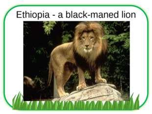 Ethiopia - a black-maned lion