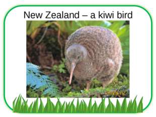 New Zealand – a kiwi bird