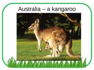 Australia – a kangaroo