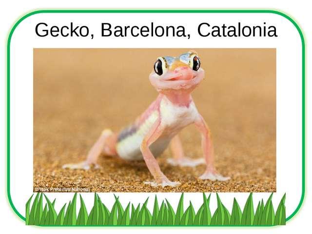 Gecko, Barcelona, Catalonia