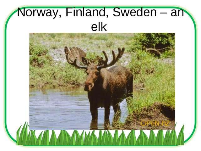 Norway, Finland, Sweden – an elk