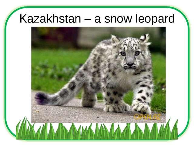 Kazakhstan – a snow leopard