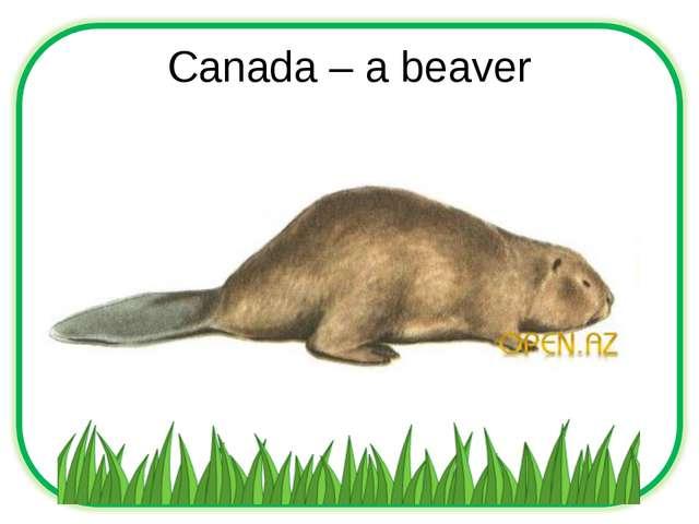 Canada – a beaver