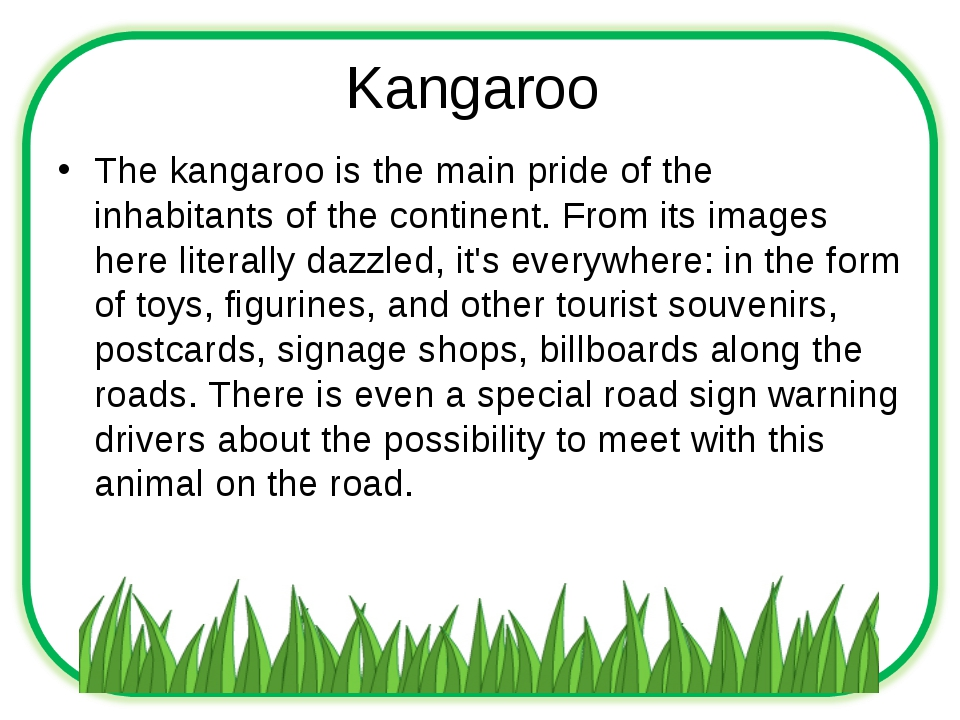 Kangaroo The kangaroo is the main pride of the inhabitants of the continent....