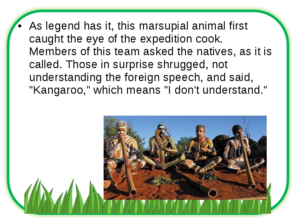 As legend has it, this marsupial animal first caught the eye of the expeditio...