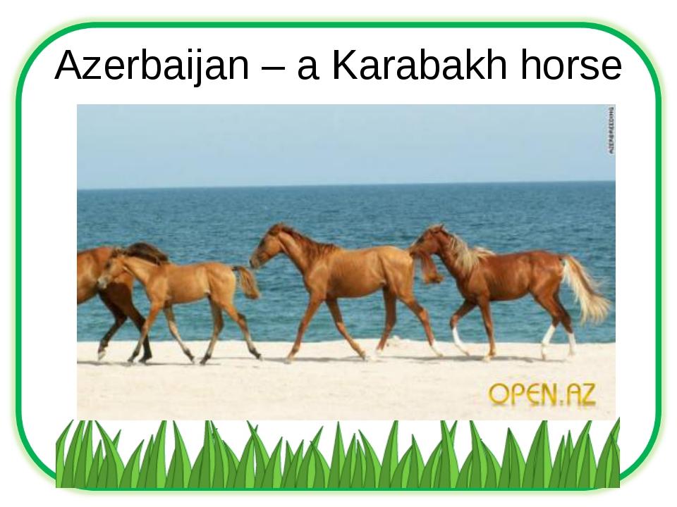 Azerbaijan – a Karabakh horse