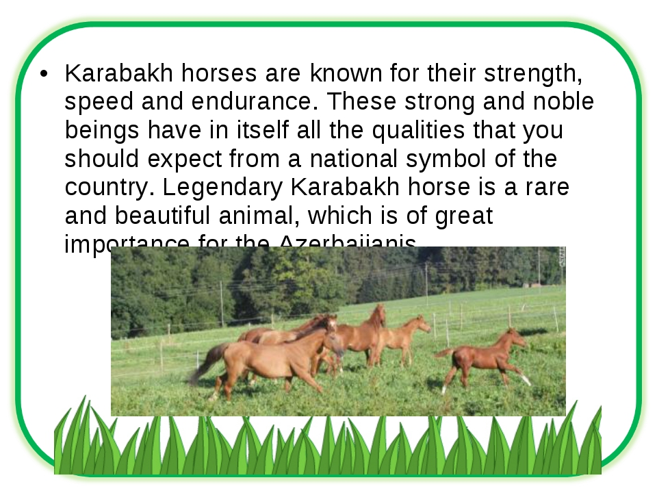Karabakh horses are known for their strength, speed and endurance. These stro...