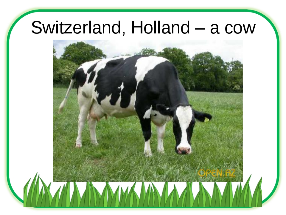 Switzerland, Holland – a cow