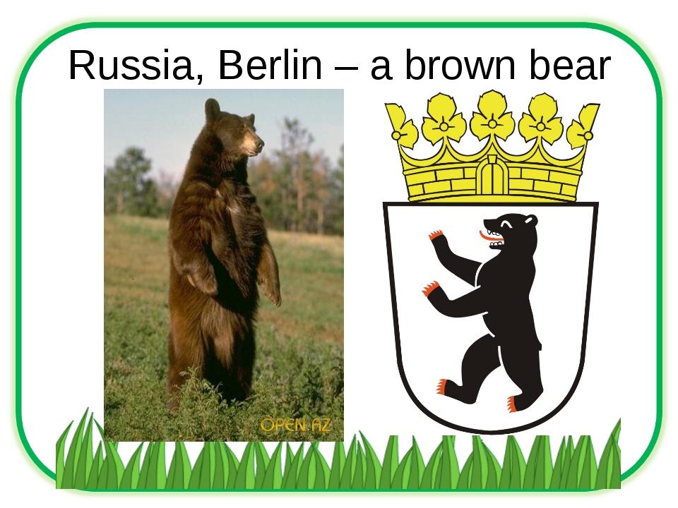 Russia, Berlin – a brown bear