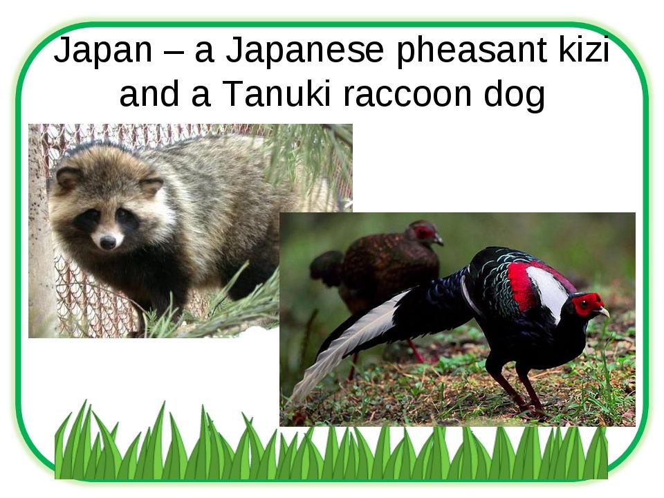 Japan – a Japanese pheasant kizi and a Tanuki raccoon dog