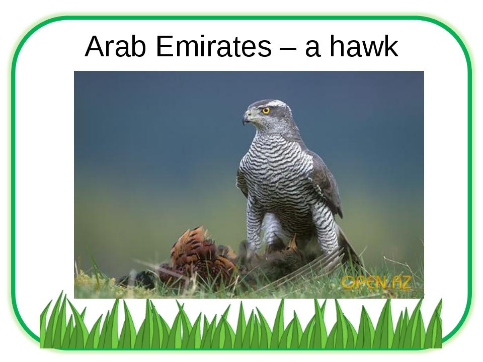 Arab Emirates – a hawk