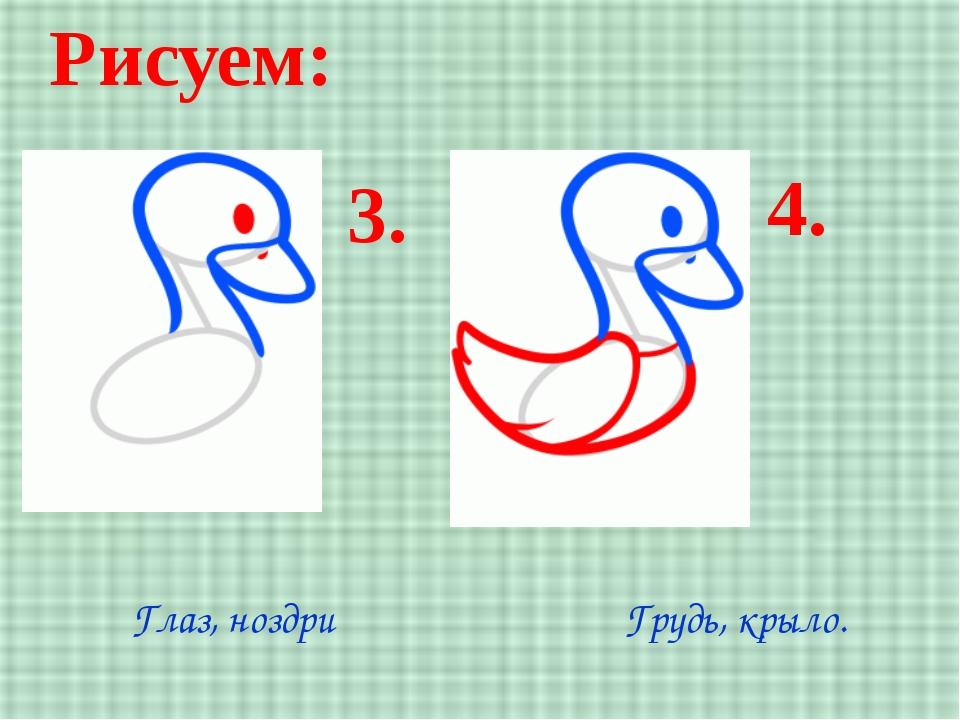 Рисуем: 3. 4. Глаз, ноздри Грудь, крыло.