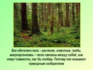 Все обитатели леса – растения, животные, грибы, микроорганизмы – тесно связан