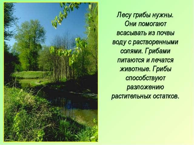 Лесу грибы нужны. Они помогают всасывать из почвы воду с растворенными солями...