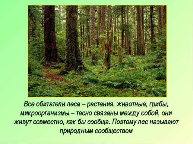 Все обитатели леса – растения, животные, грибы, микроорганизмы – тесно связан...