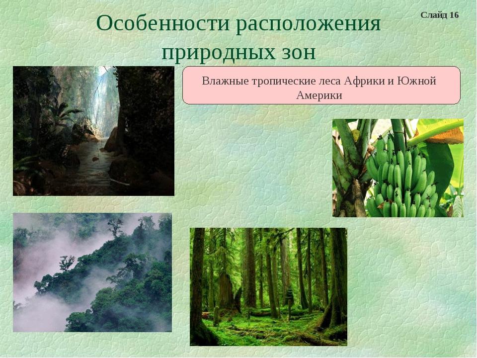 Особенности расположения природных зон Влажные тропические леса Африки и Южно...