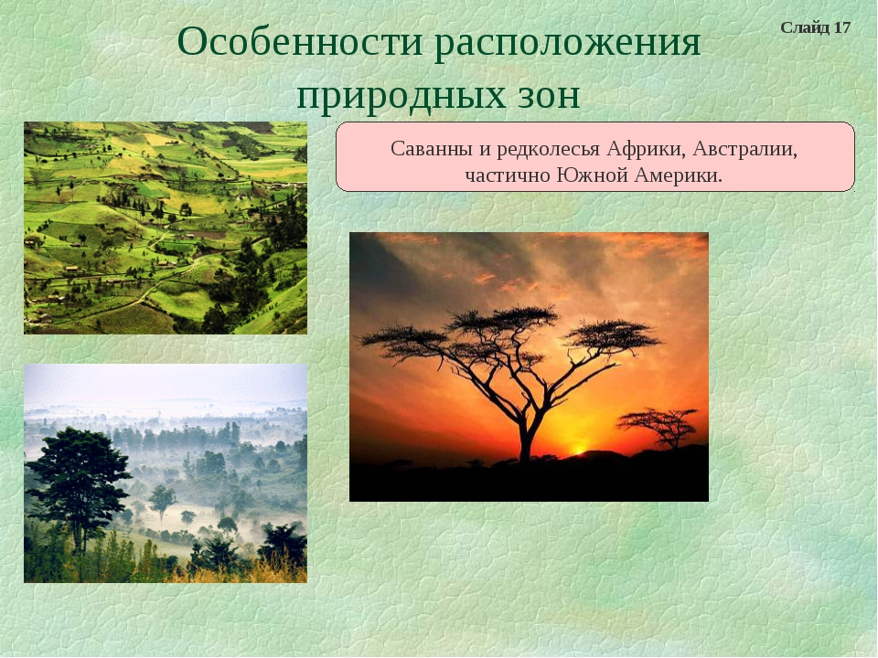 Особенности расположения природных зон Саванны и редколесья Африки, Австралии...