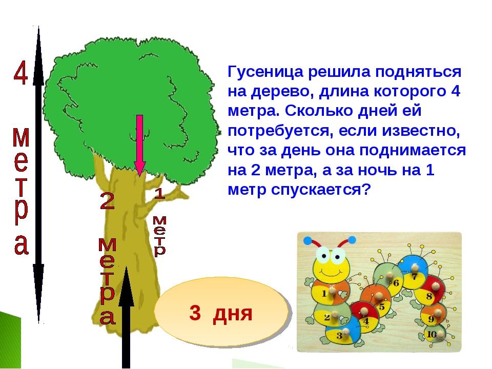 Гусеница решила подняться на дерево, длина которого 4 метра. Сколько дней ей...