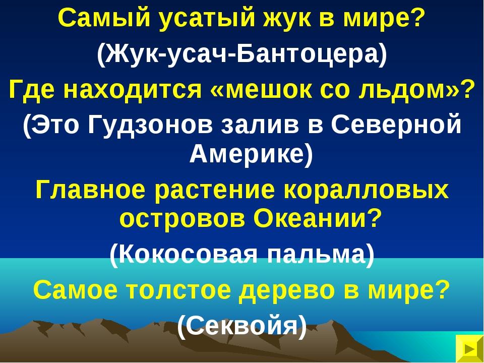 Самый усатый жук в мире? (Жук-усач-Бантоцера) Где находится «мешок со льдом»?...