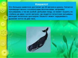Кашалот Это большое животное достигает до 20 метров в длину. Питается преимущ