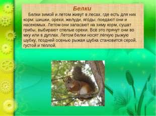 Белки Белки зимой и летом живут в лесах, где есть для них корм: шишки, орехи,