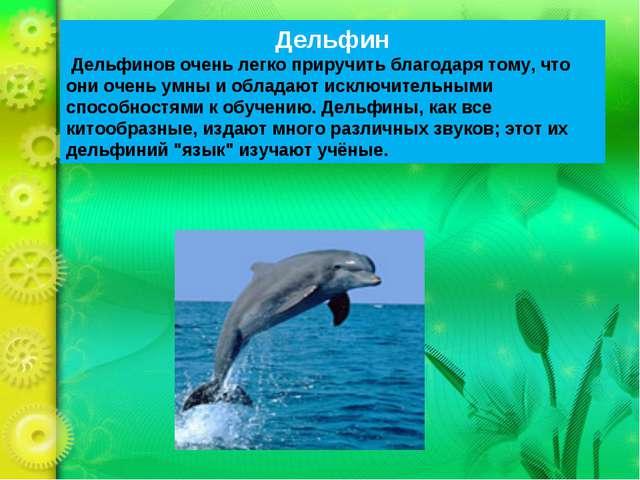 Дельфин Дельфинов очень легко приручить благодаря тому, что они очень умны и...
