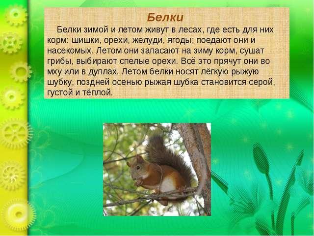 Белки Белки зимой и летом живут в лесах, где есть для них корм: шишки, орехи,...