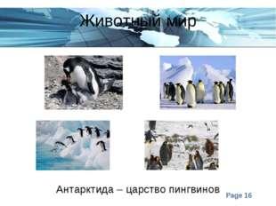 Животный мир Антарктида – царство пингвинов Page *