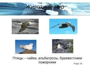 Животный мир Птицы – чайки, альбатросы, буревестники поморники Page *