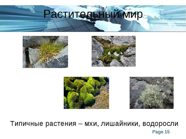 Растительный мир Типичные растения – мхи, лишайники, водоросли Page *